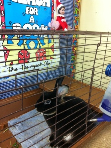 Pippi visits Ty the bunny
